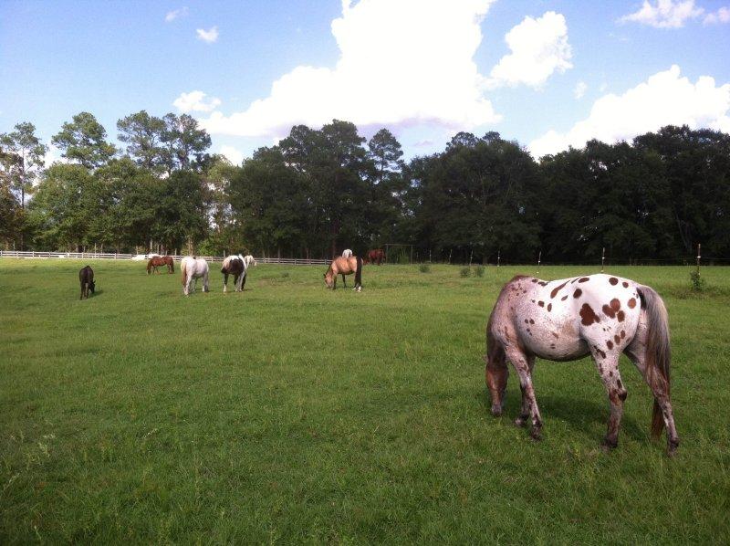 The Herd_Blog 3